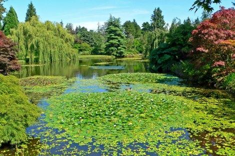 VanDusen_Botanical_Garden_3